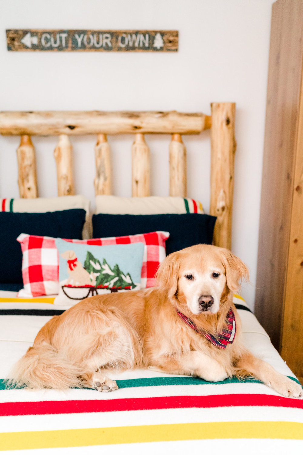 Vermont Ski House Design Golden Retriever