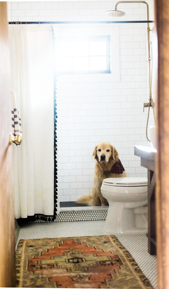 Vermont Golden Retriever bathroom