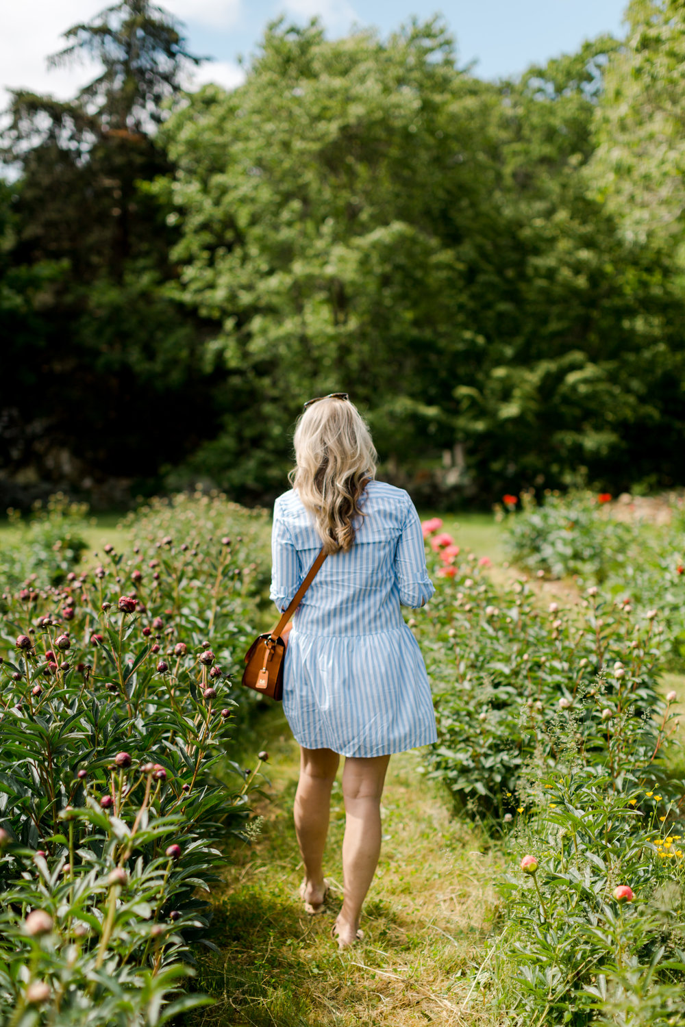 Peony Farm in Little Compton, Rhode Island from Abby Capalbo | Photography: Erin McGinn