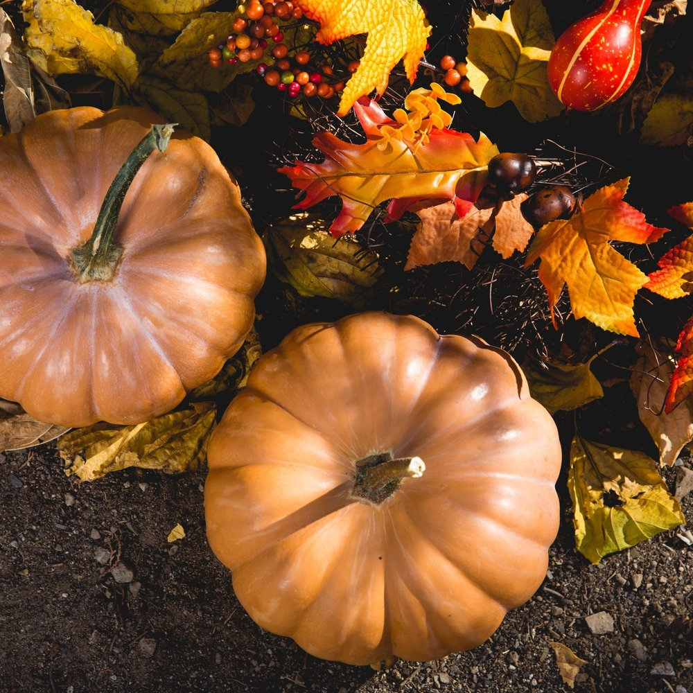 abundance-autumn-fall-619421.jpg