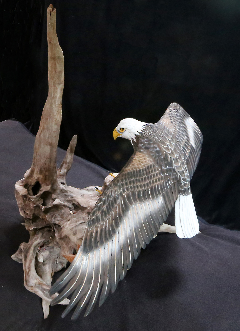 New Eagle.JPG