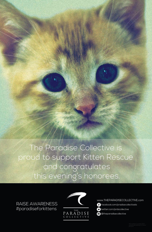 kitten-rescue-001