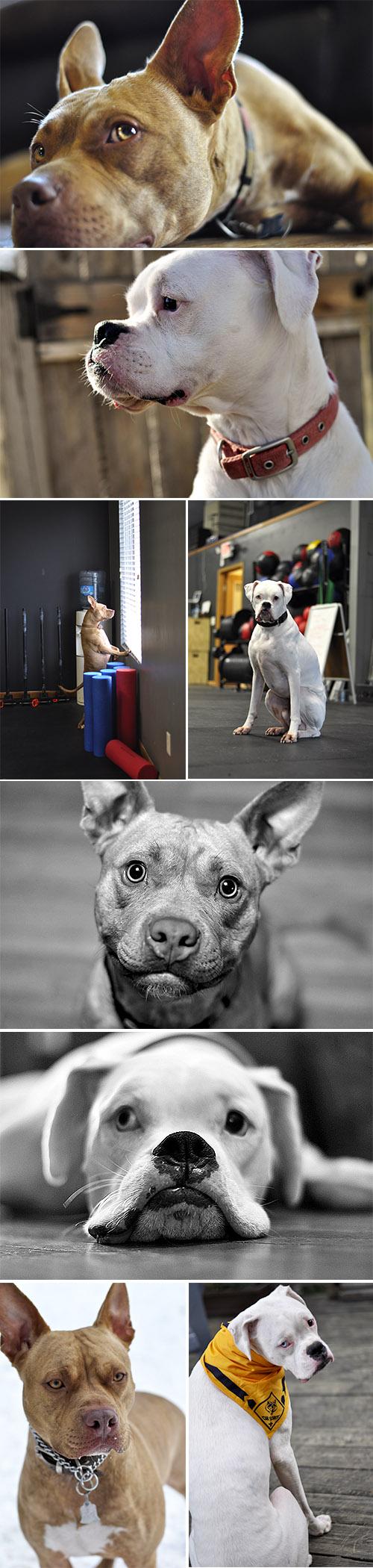dogsProfile.jpg