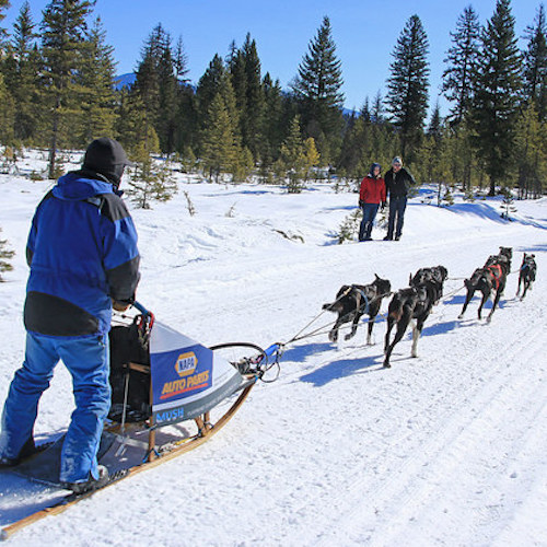 Steve Riggs    VIM (Very Important Musher)    Bio coming soon!