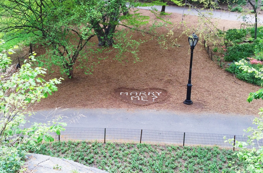 Our wedding proposal in Central Park.