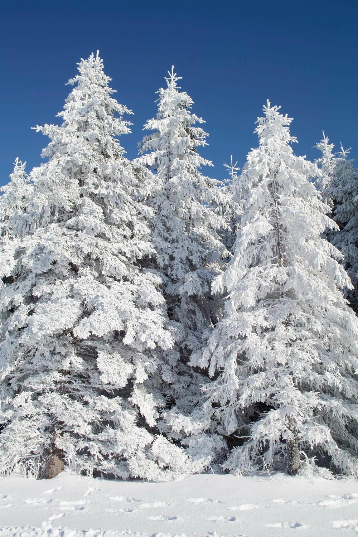 iStock_000014342624_Winter.jpg