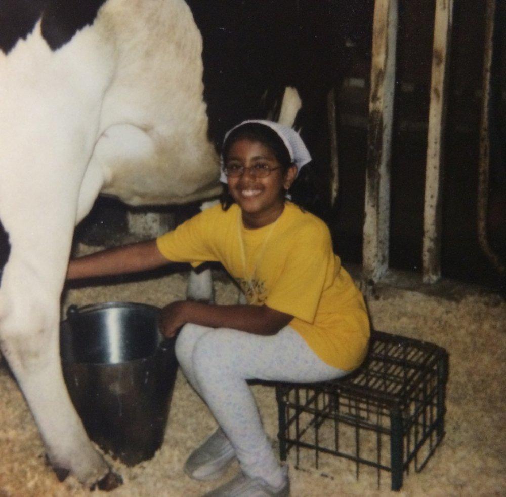 8 year-old Aparna milks a cow at farm camp.