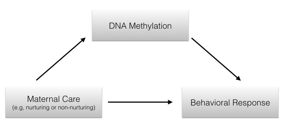 DNAm moderator keynote.001.jpeg