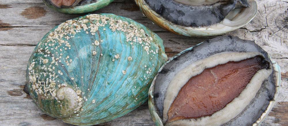 Abalone-Closeup.jpg