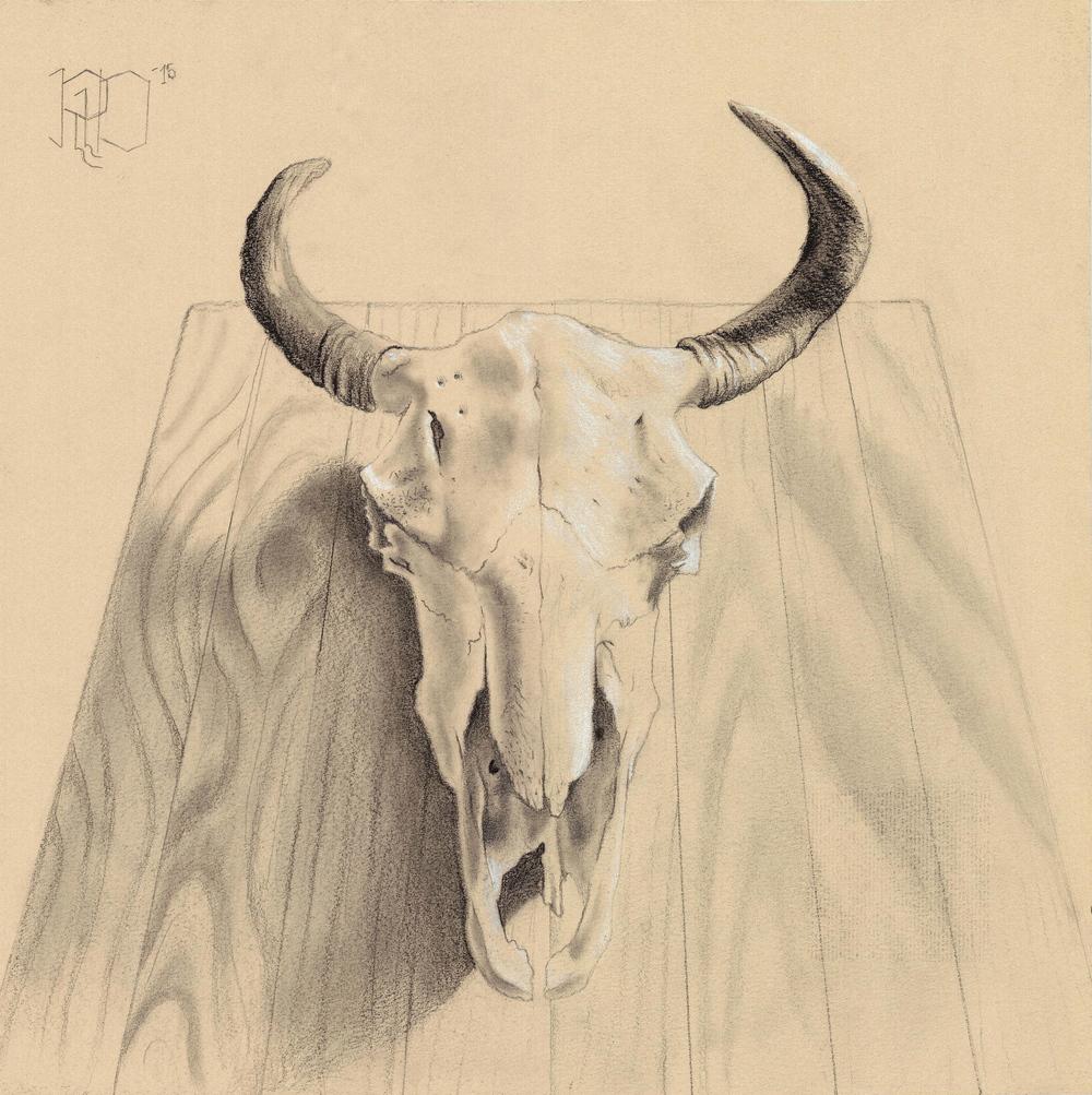 Bison Skull #1