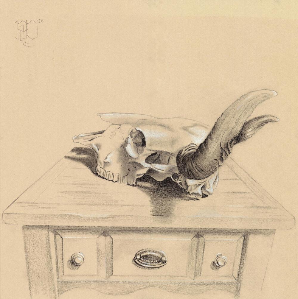 Bison Skull #2