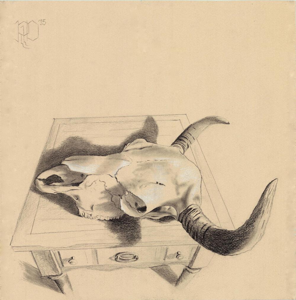 Bison Skull #6