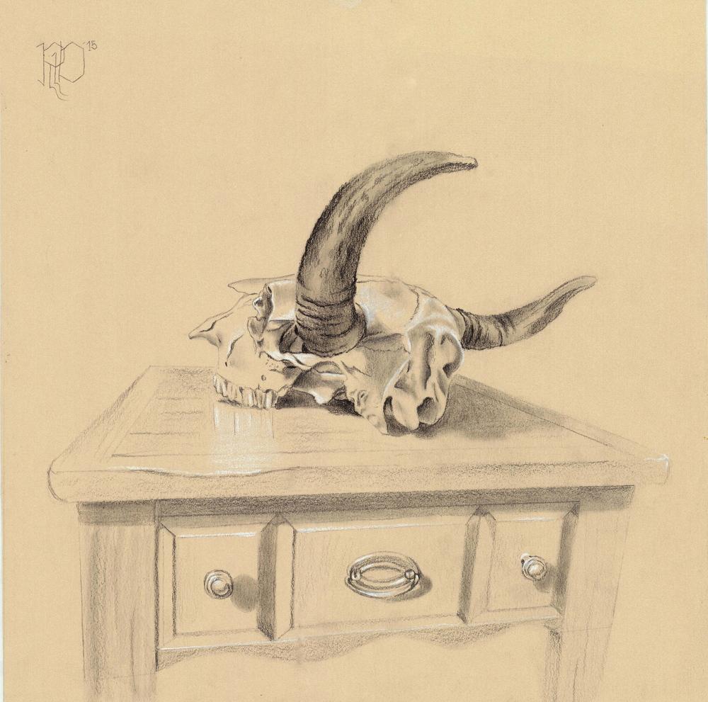 Bison Skull #5