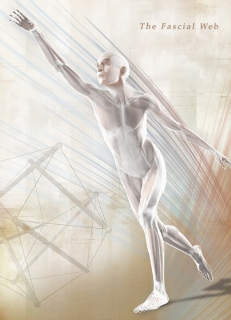 The continuous network of fascia in the body