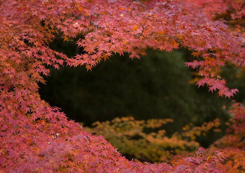 Autumn Japan 2017