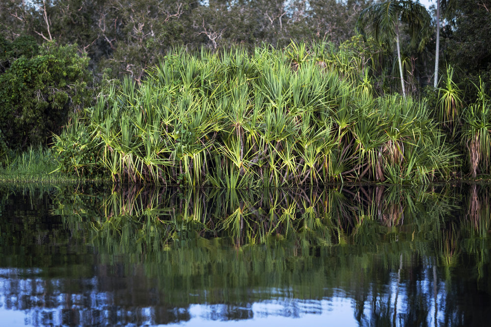 14  Yellow Water Billabong      -12.891170, 132.519560     Ngurrungurrudjba country, Yellow Water, Kakadu, NT