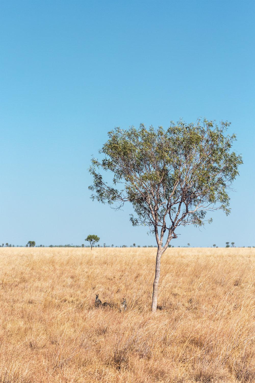 6 Shade Seekers      -17.921012, 139.682423     Gangalidda and Garawa country,Burketown, QLD