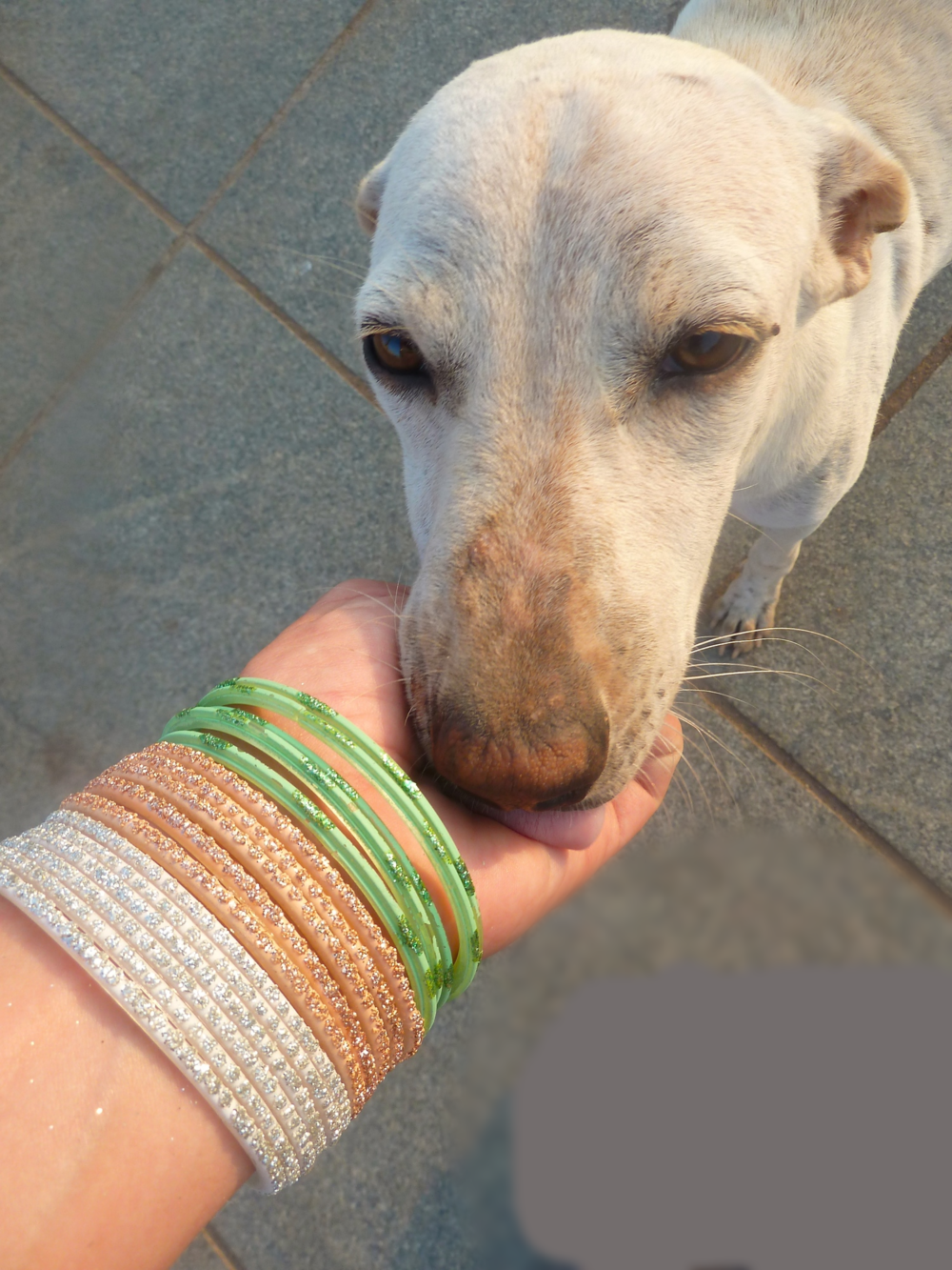 Street dog love in Pondicherry