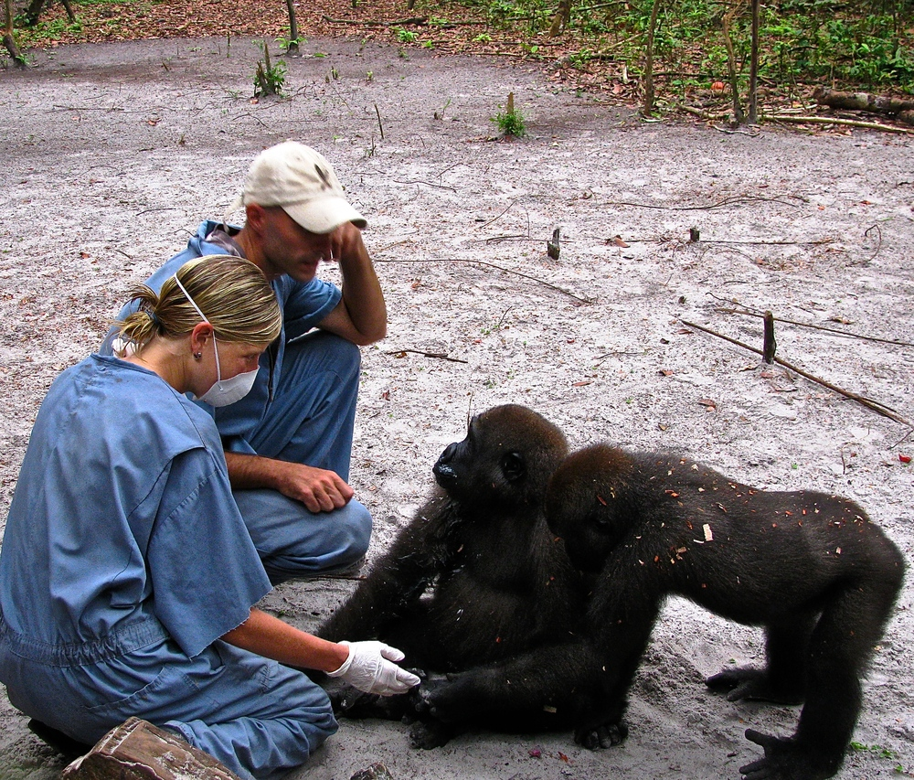 Dr. Erika Sullivan visits Dr. Nicholas Bachand at the Fernan-Vaz Gorilla Project