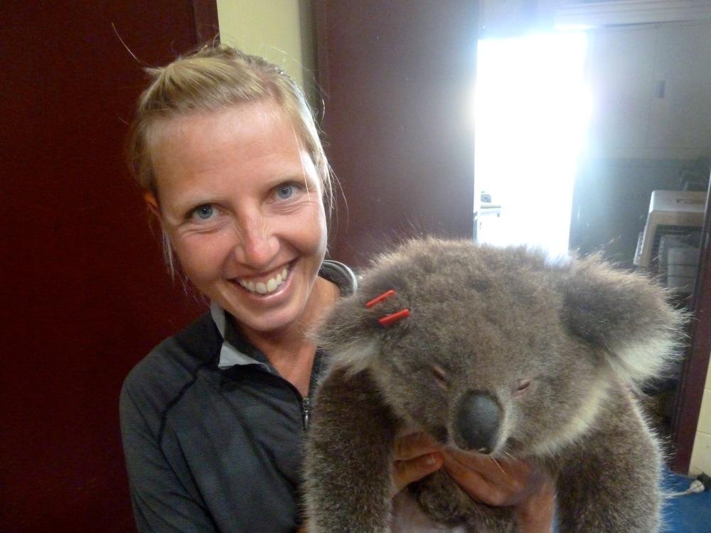 kangaroo island koala management