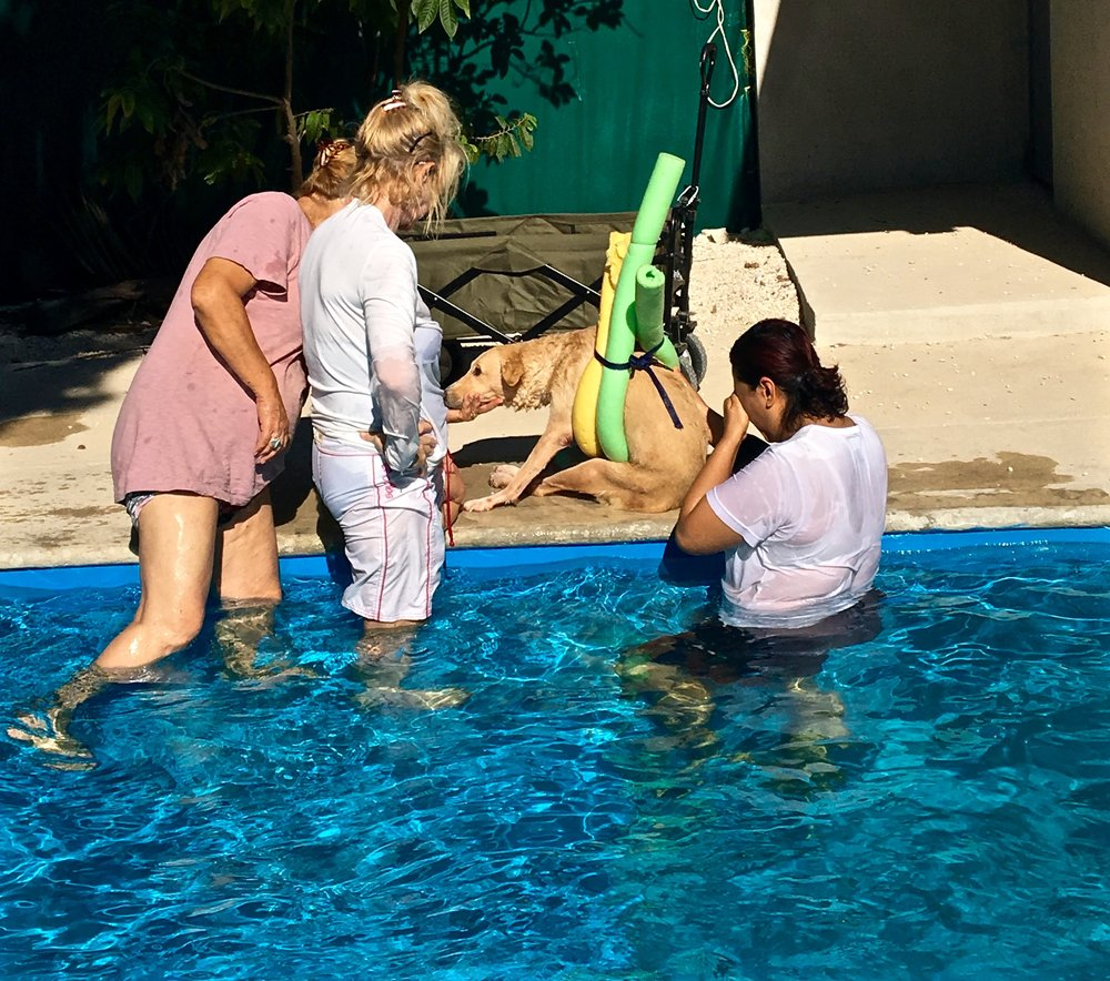This dog has neurologic injuries and was adopted by a local women who returns to the facility's pool for physiotherapy each week.