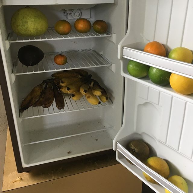 My landlord has been away for a few months and I have been eating all the fruit from his garden, but there is just too much for one family to consume. Lucky the #freefridge exists. All organic and pesticide free, free range whatevas. No need for the increased price for local produce at the grocery when you use your land effectively and have good neighbors.