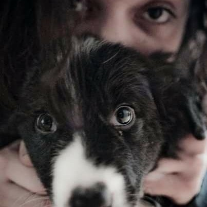 9 years today! 😍 #dog #blackandwhite #smile #picoftheday #instapict #instafun #animal #love #cute #eyes #bordercollie #happy #puppy #anniversaire #anniversary #4legs  Thanks to @bartolomeolapunzina who took those back then.