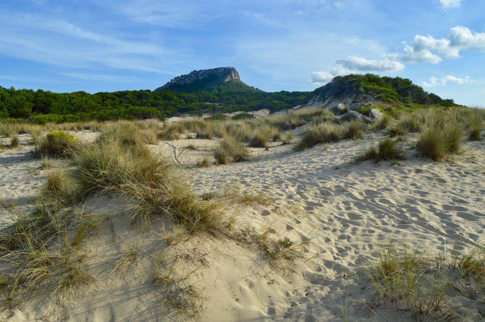 Dunes,Playa Cala de Sa Mesquida