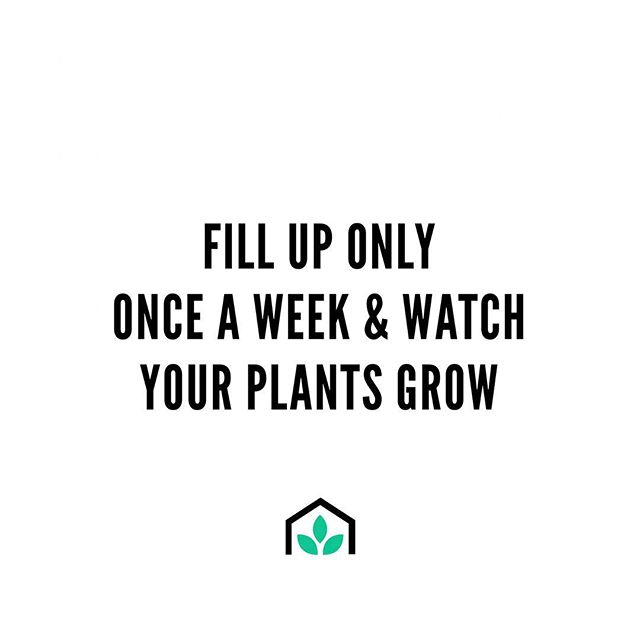 Keep forgetting to water your plants every day and night? ⠀⠀ With our GrowSPACE self-watering pots you only have to water it once a week! 💦 ⠀⠀ Simply fill up the water reservoir and allow your plants to water themselves! 🌿 ⠀⠀ Best part is, your plants are happier, healthier & produce more food in less space with zero water wastage! 💧 ⠀⠀ How good is that! 😁 ⠀⠀ To find out more, click the link in the bio