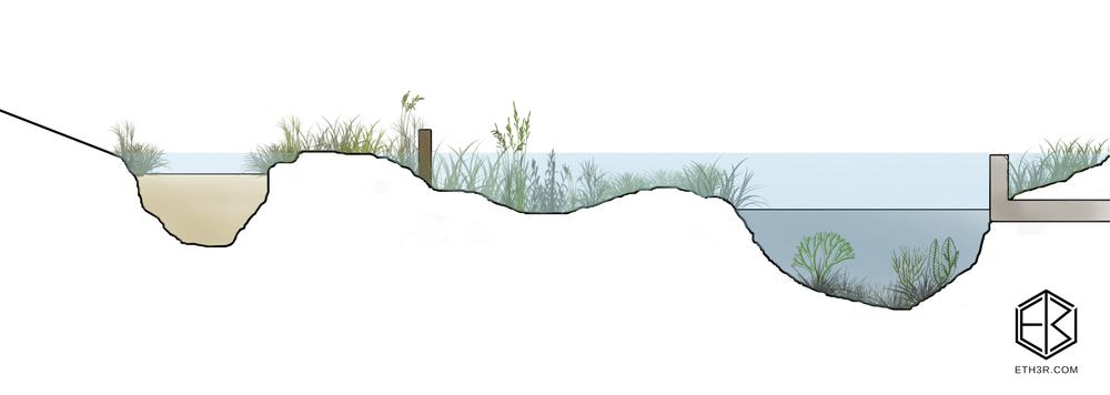 swamps.jpg