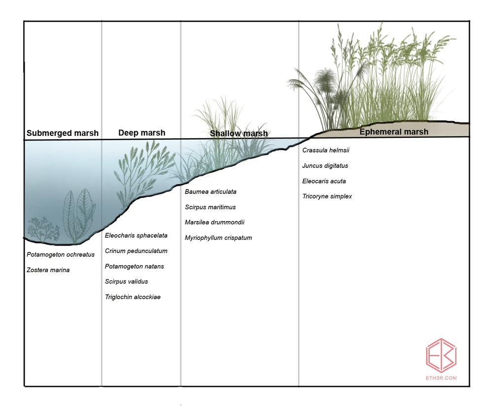swamps1.jpg