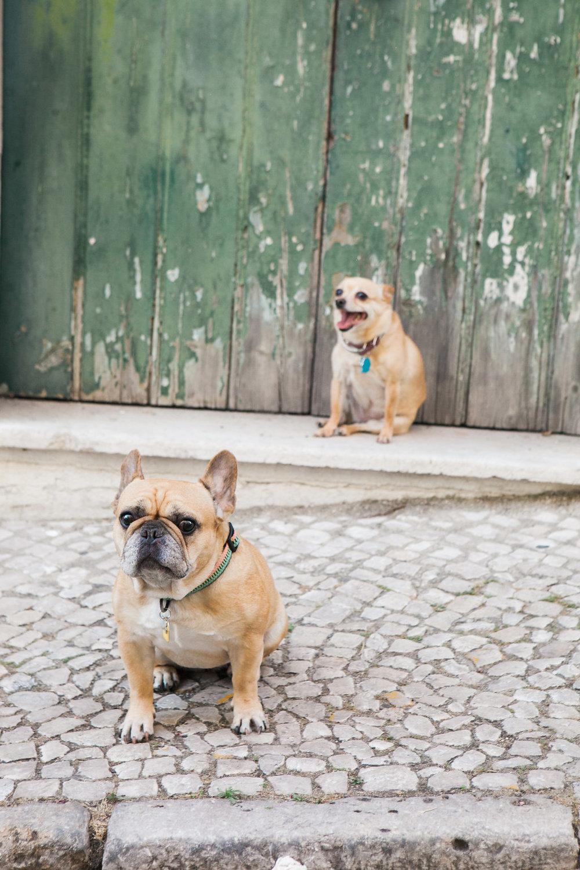 Priscilla De Castro Photography dogs