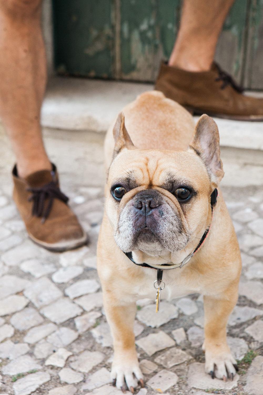 Priscilla De Castro Photography dog