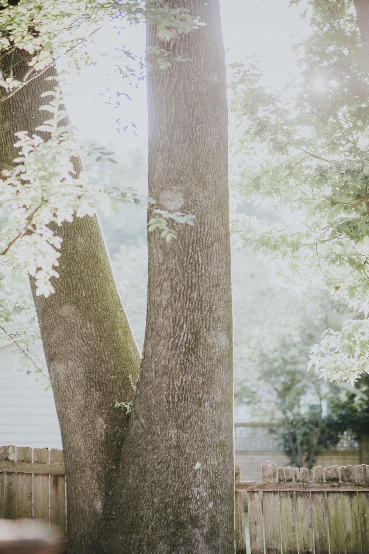 Kaitlyn Stoddard Wedding Photography Tennessee tree in backyard