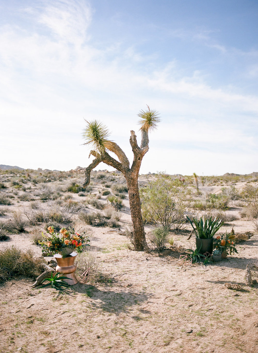 Jessica Schilling Wedding Photography joshua tree in desert
