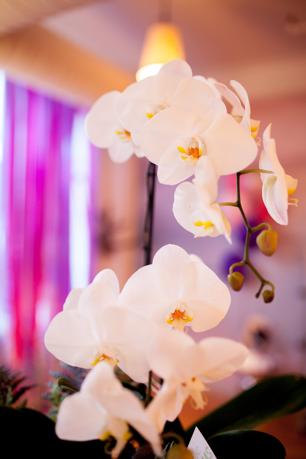 Orchid by Cville Blooms