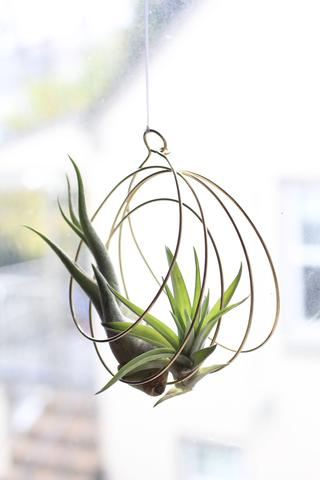 Air Plant Hangers by Elaine B Jewelry