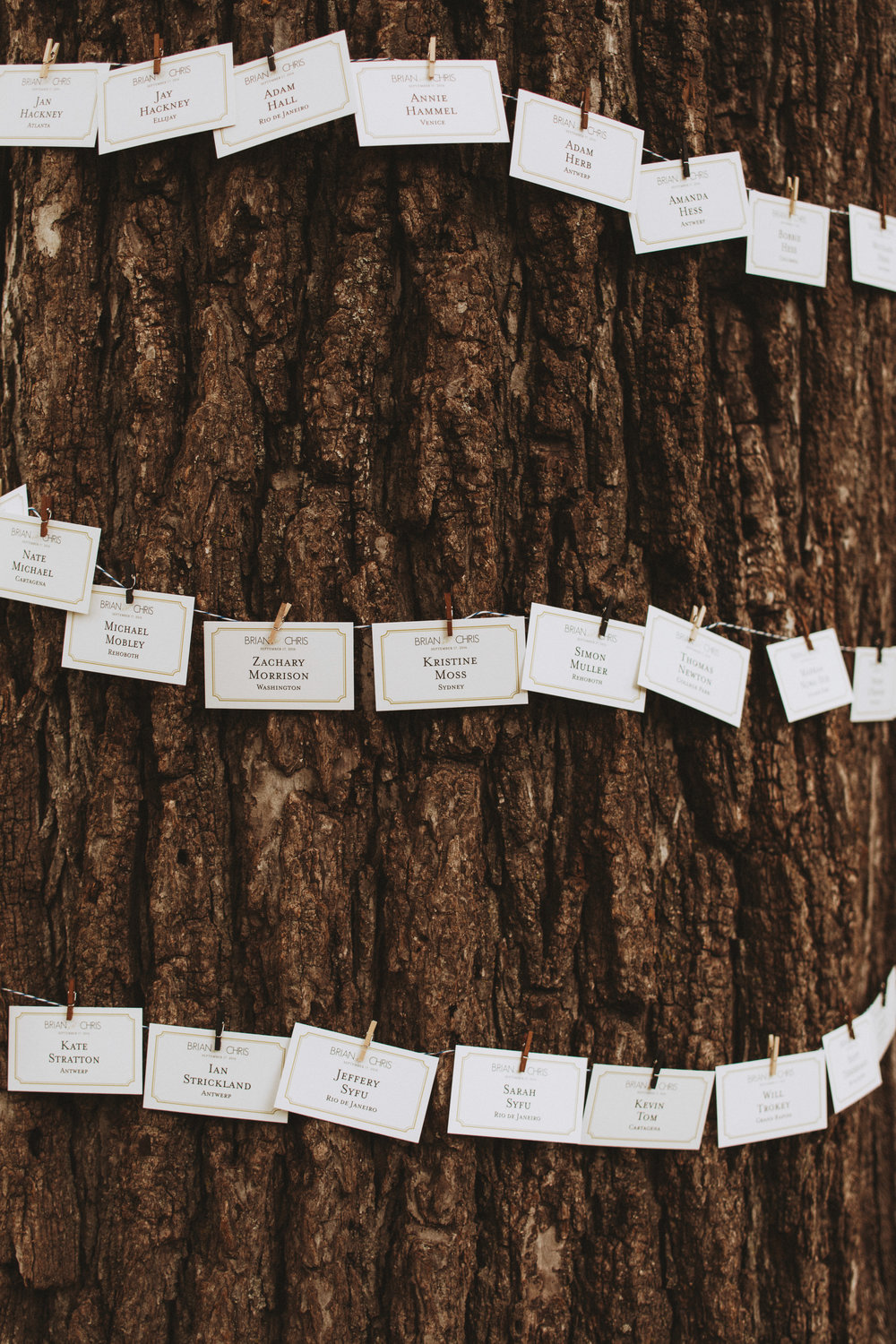 escort cards displayed on a tree