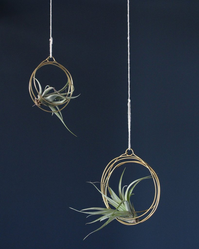 Elaine B Jewelry Small Tillandsia Ornament