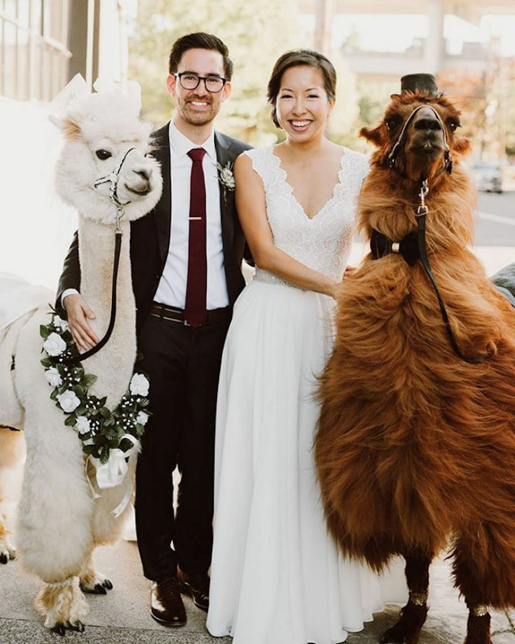 Photo by  Kim Smith-Miller Photography  with  Classy Camelids