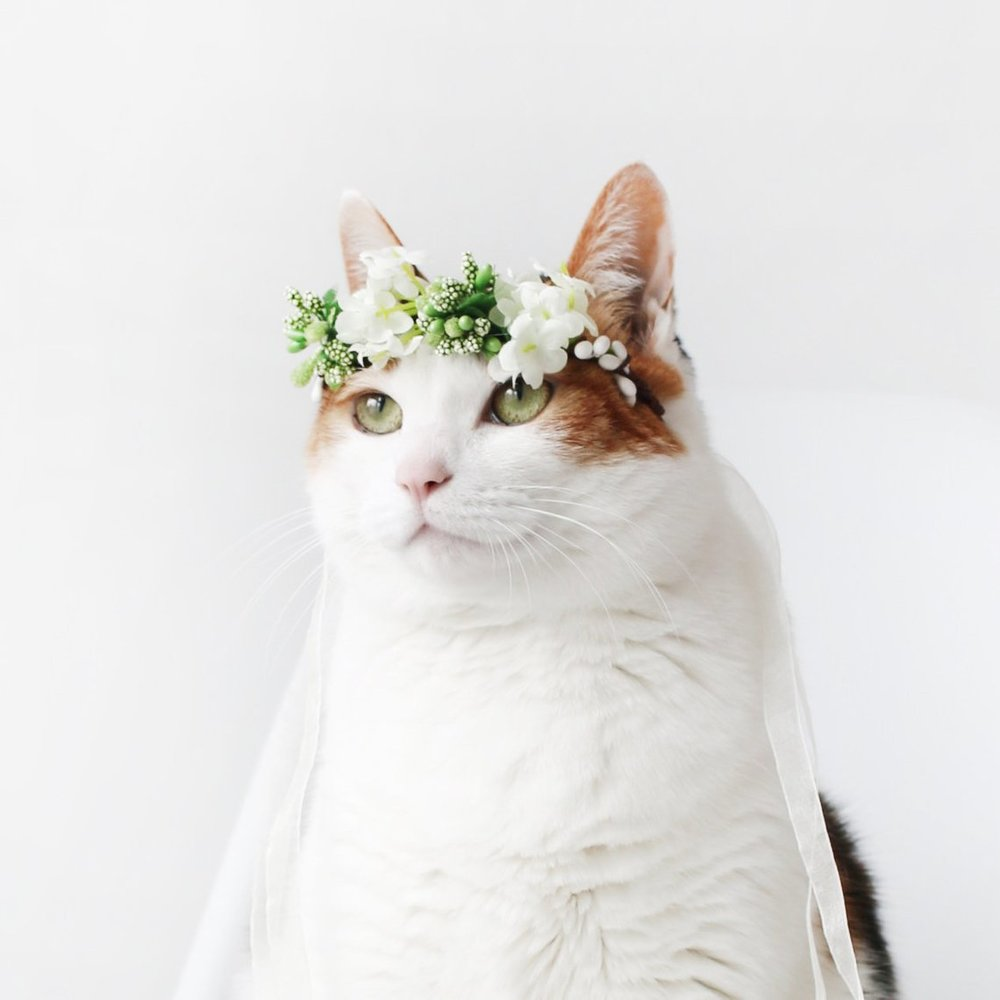 Green and White Cat Flower Crown by Miyo Pet