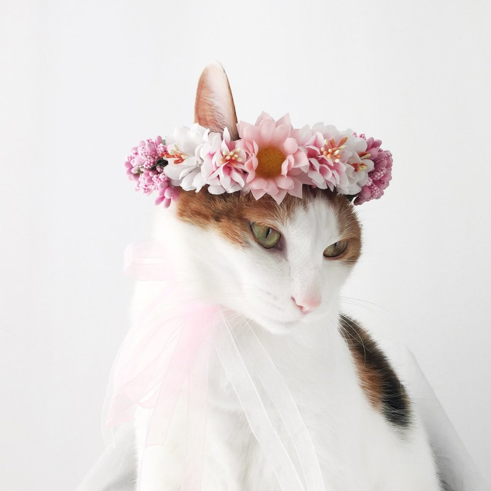 Pink and White Cat Flower Crown by Miyo Pet