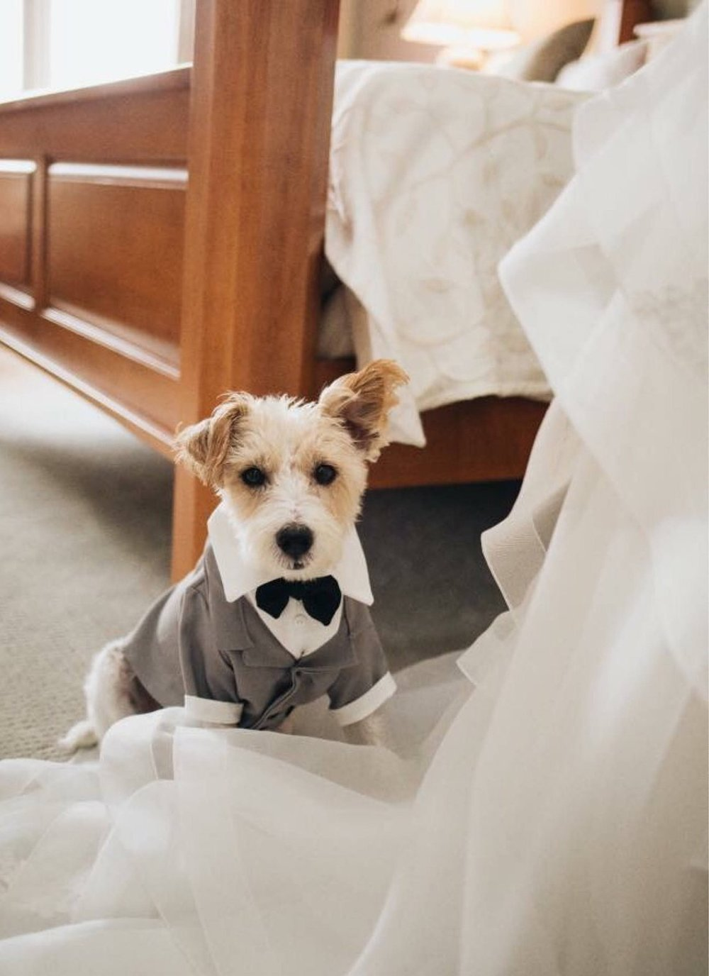 Dog Tuxedo by Coco and Bushka Couture