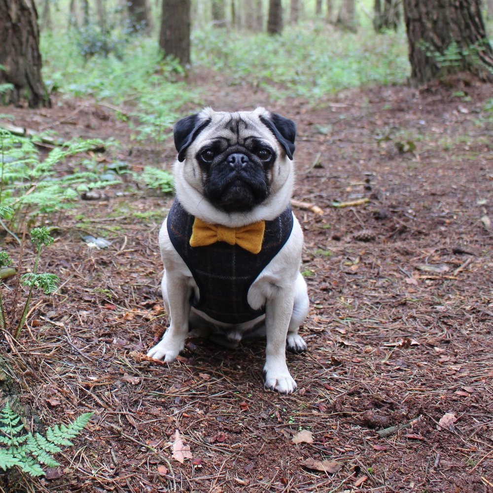 Tweed Bowtie Dog Harness by Sidney and Betty