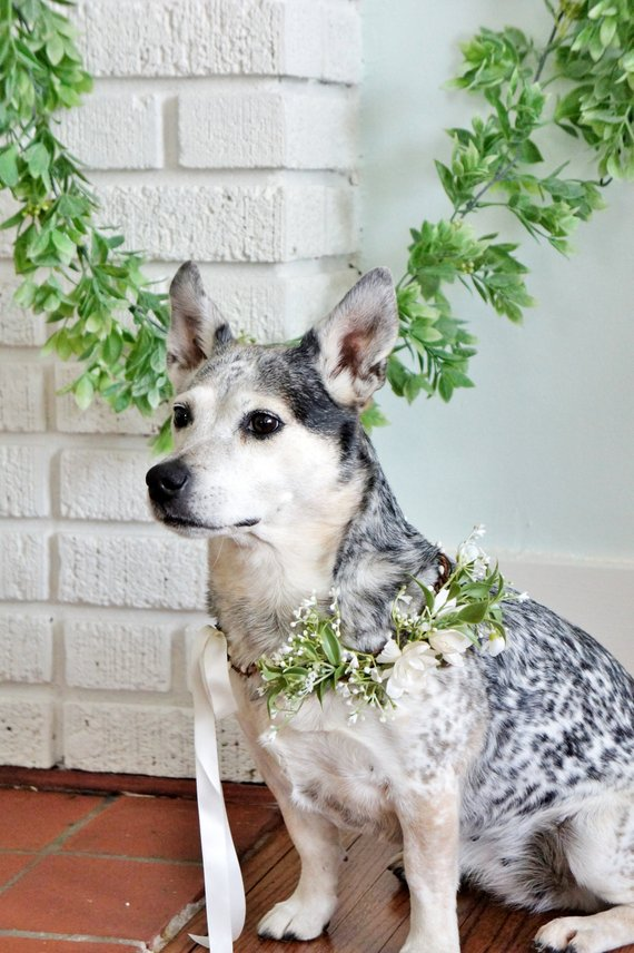 Floral Wreath Dog Collar by Fashion Touch Weddings