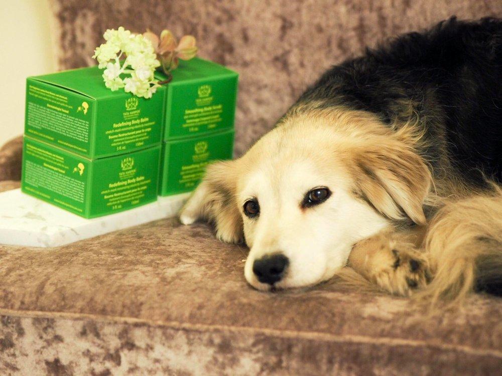 Tyttöjenillassa oli mukana tietysti myös Nella the Dog <3  Katso koko Mamma Mian 7. jakso   täältä!