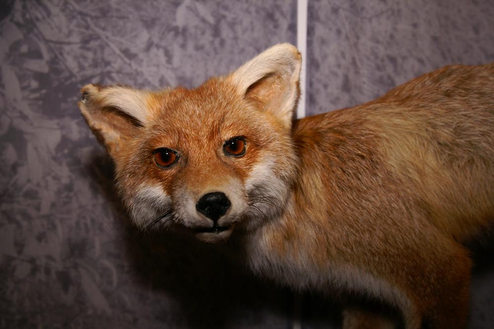 foxshop.jpg