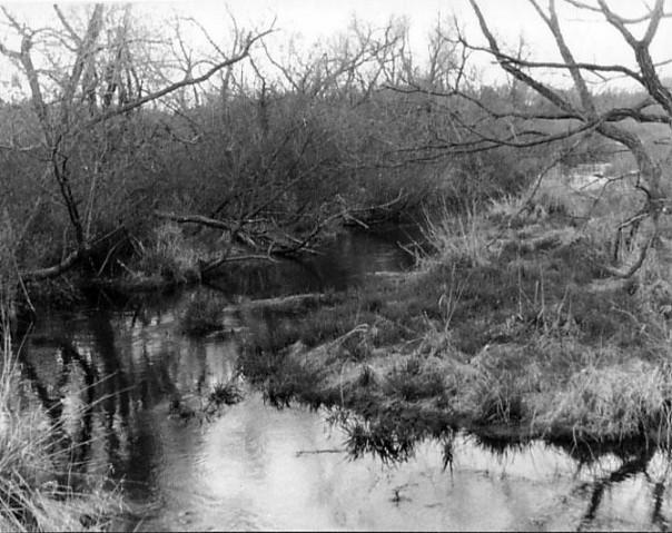 Creek-1924500372-O.jpg