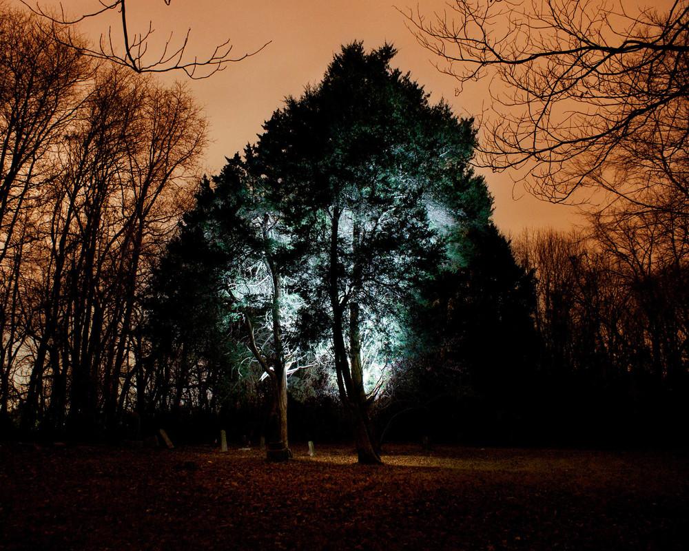 Glowey+Tree-1926525340-O.jpg