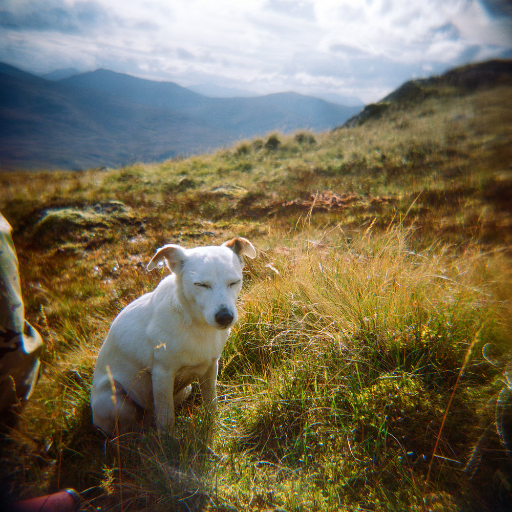 Scotland-Holga-Dog (20x20).jpg
